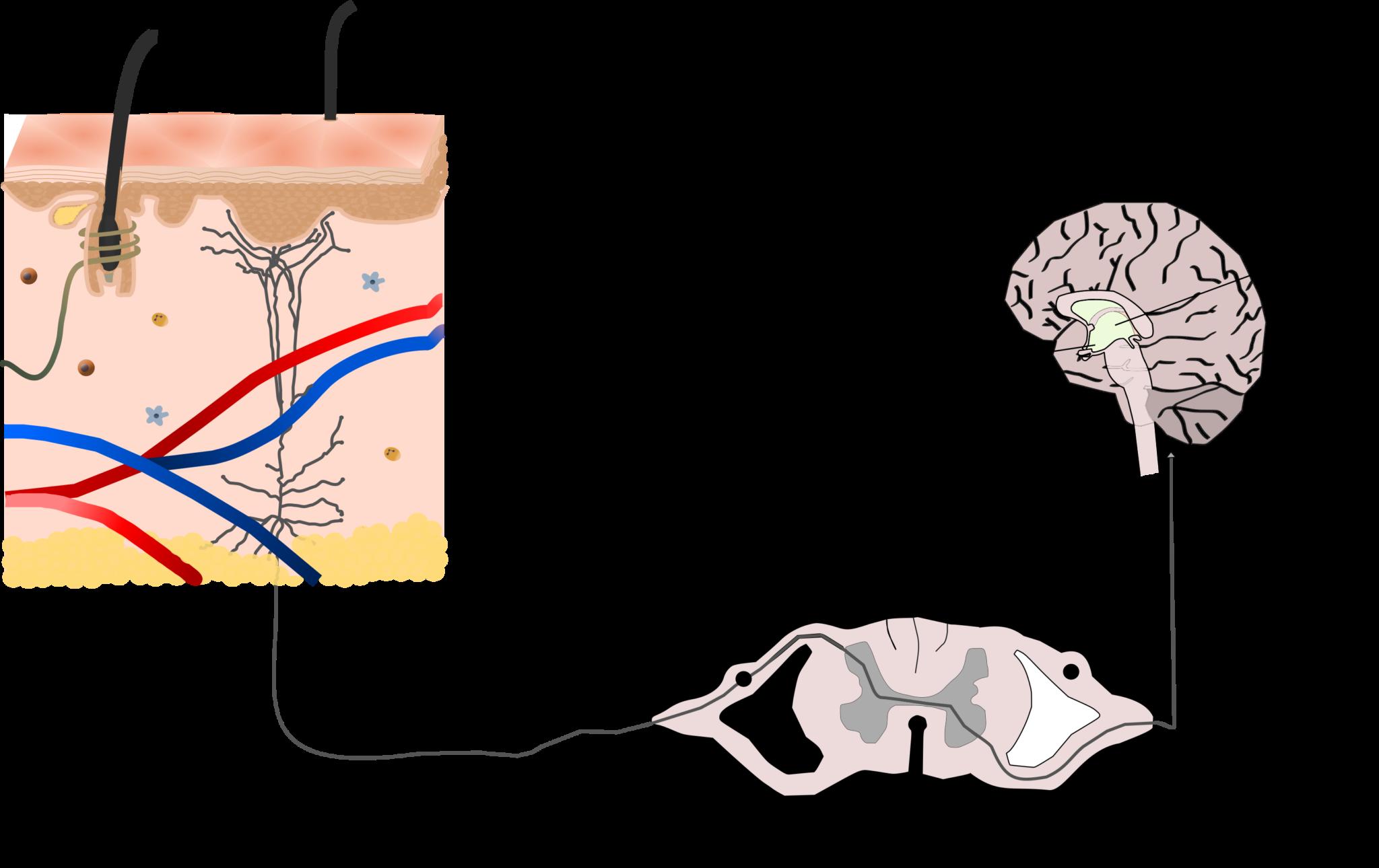 Ruta señalización termosensación